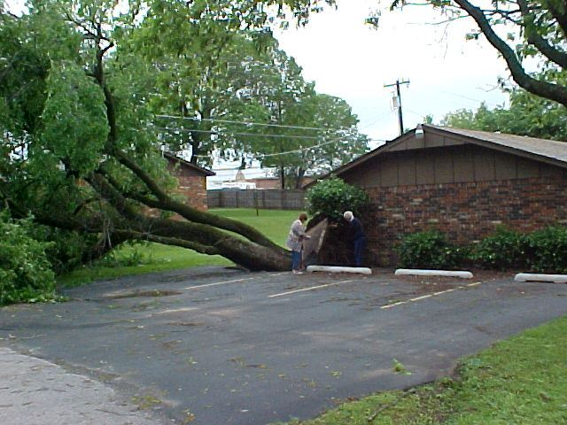 Tree Fallen over by a House